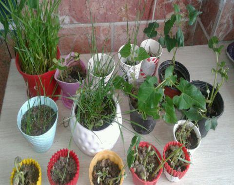 قلمه زدن و کاشت گیاهان دوم سه